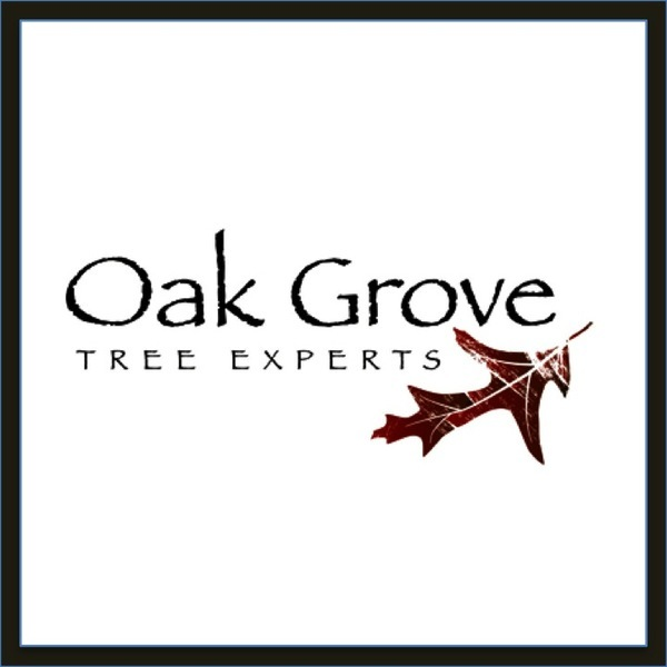 Everything You Need In Fauquier County Oak Grove Tree Experts in Warrenton VA