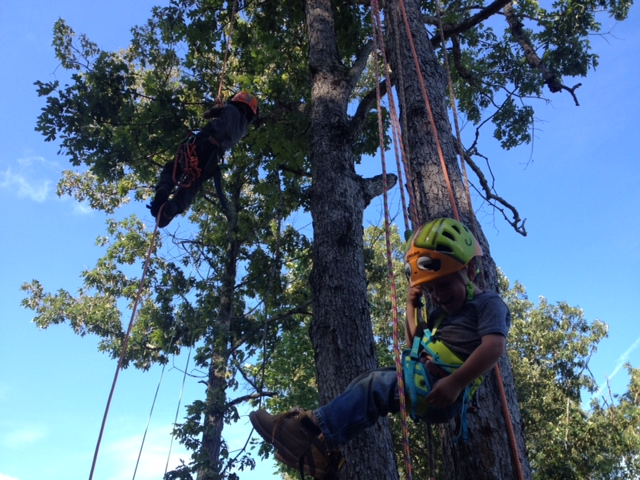 Matthew's First Independent Climb by Oak Grove Tree Experts in Warrenton VA